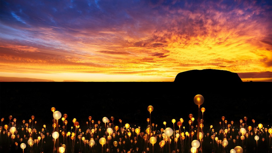 Uluru: Field of Light