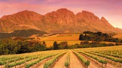 Robertson Wine Route: Cruise Cabernet